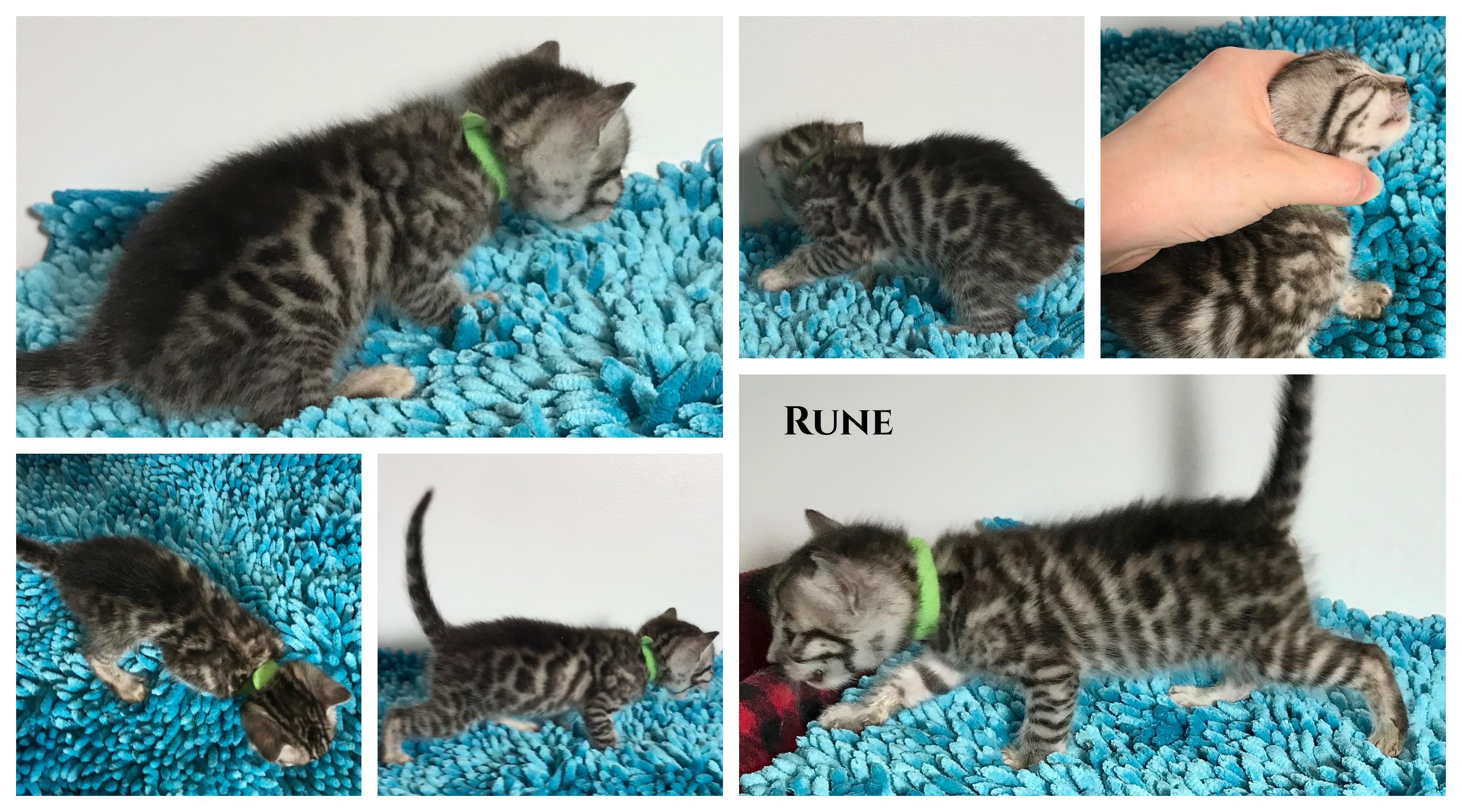 Rune 3 weeks