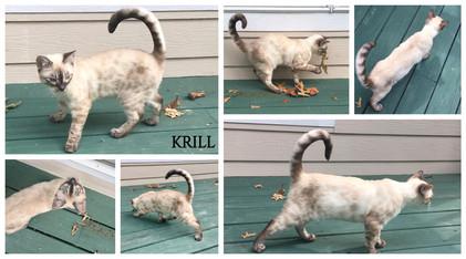 Krill 21 weeks.jpg