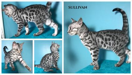 Sullivan 16 weeks.jpg