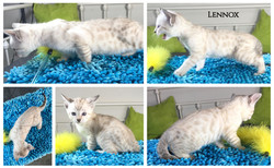 Lennox 6 weeks