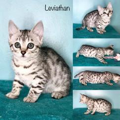 Leviathan 10 weeks