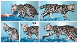 Suri 15 weeks