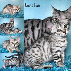 Leviathan 12 weeks