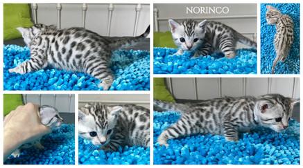 Norinco 3 weeks.jpg