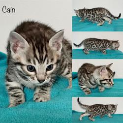 Cain 5 weeks