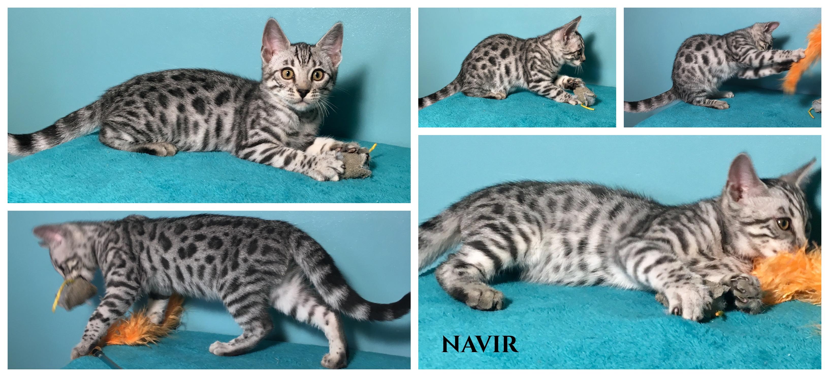 Navir 12 weeks