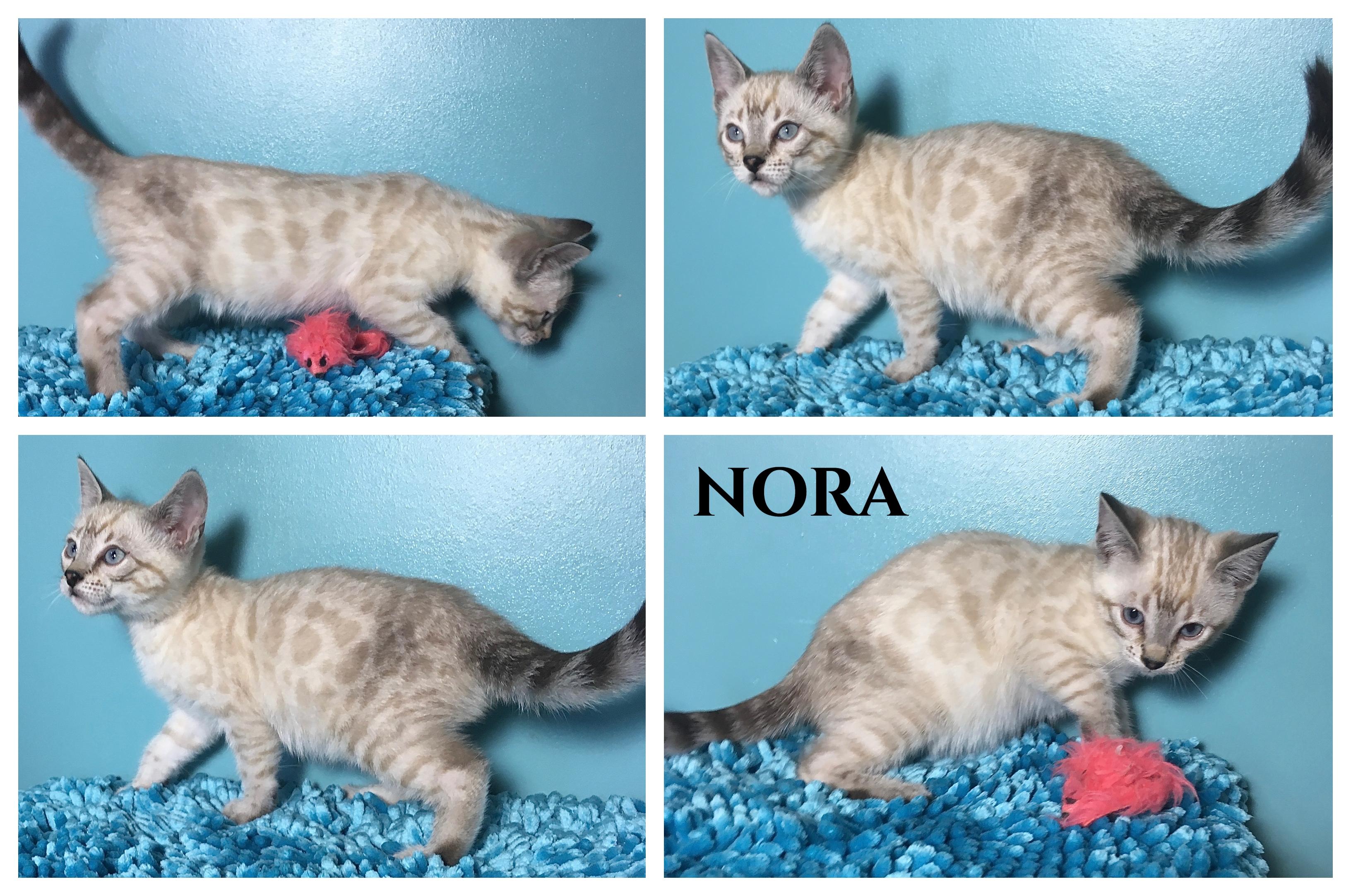 Nora 10 weeks