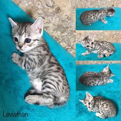 Leviathan 4 weeks