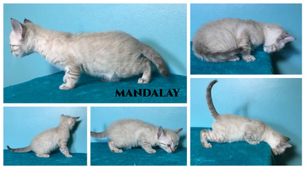 Mandalay 5 weeks.jpg