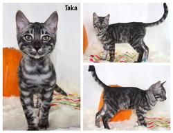 Taka 13 weeks