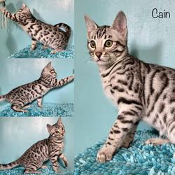 Cain 14 weeks