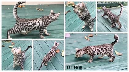 Luthor 19 weeks.jpg
