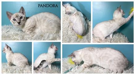 Pandora 13 weeks.jpg