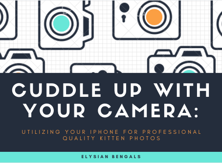 Cuddle Up with Your Camera: Utilizing your iPhone for Professional Quality Kitten Photos
