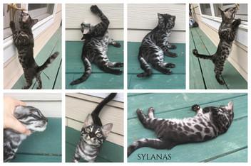 Sylanas 12 weeks.jpg