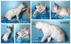 Lennox 12 weeks