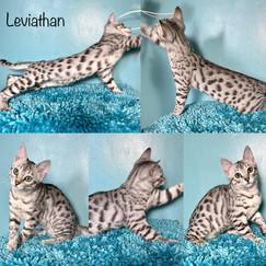 Leviathan 16 weeks