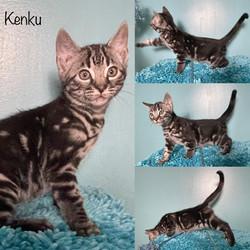 Kenku 9 weeks