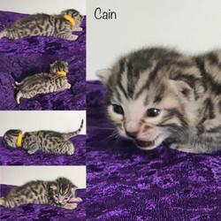 Cain 2 weeks