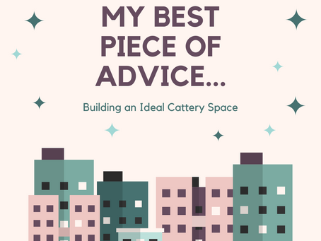 My Best Piece of Advice...Building the Ideal Cattery Space