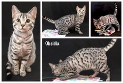 Obsidia 20 weeks
