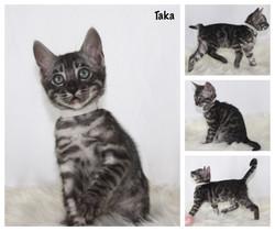 Taka 8 weeks