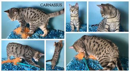 Carnassus 14 weeks.jpg