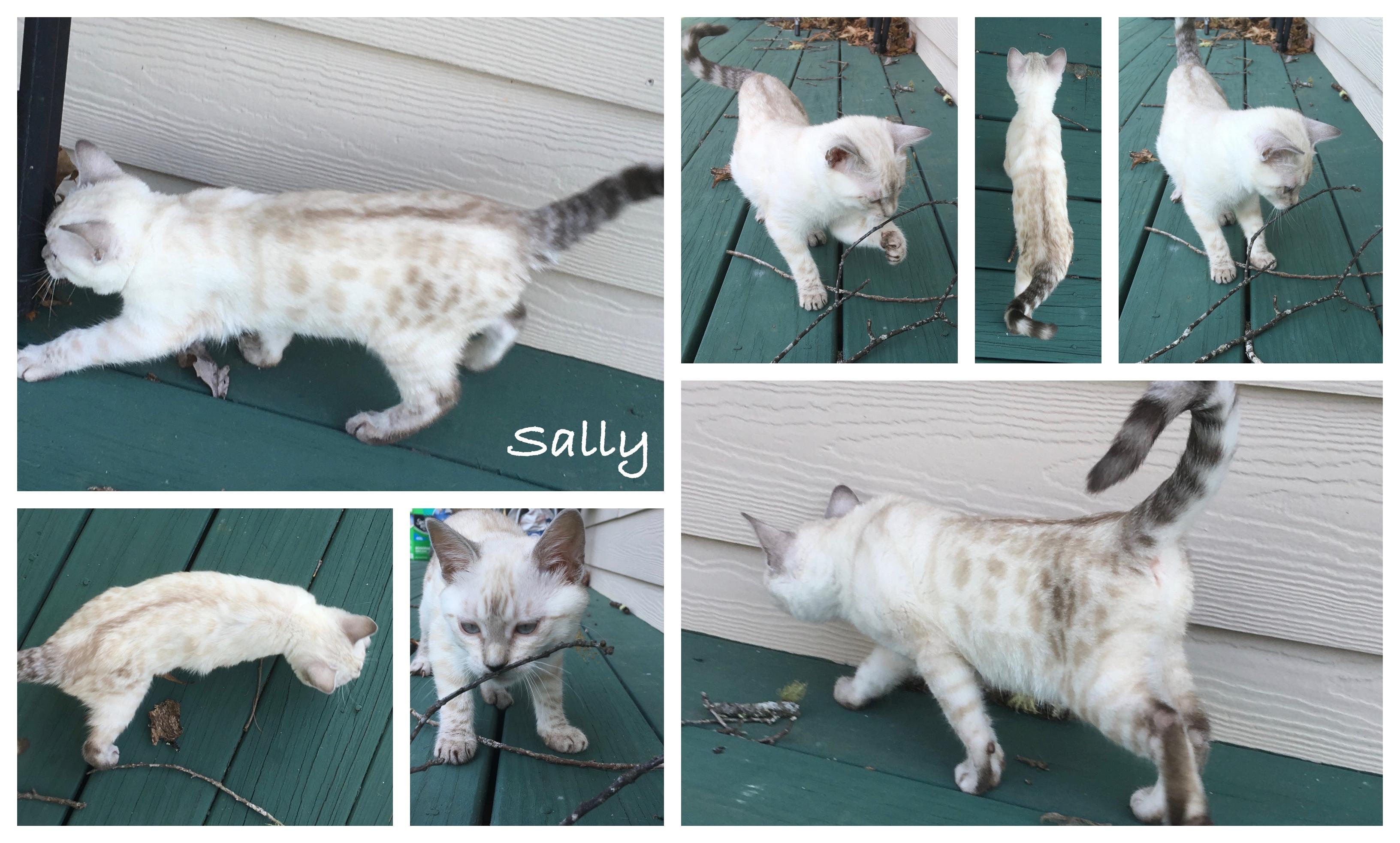Sally 13 weeks