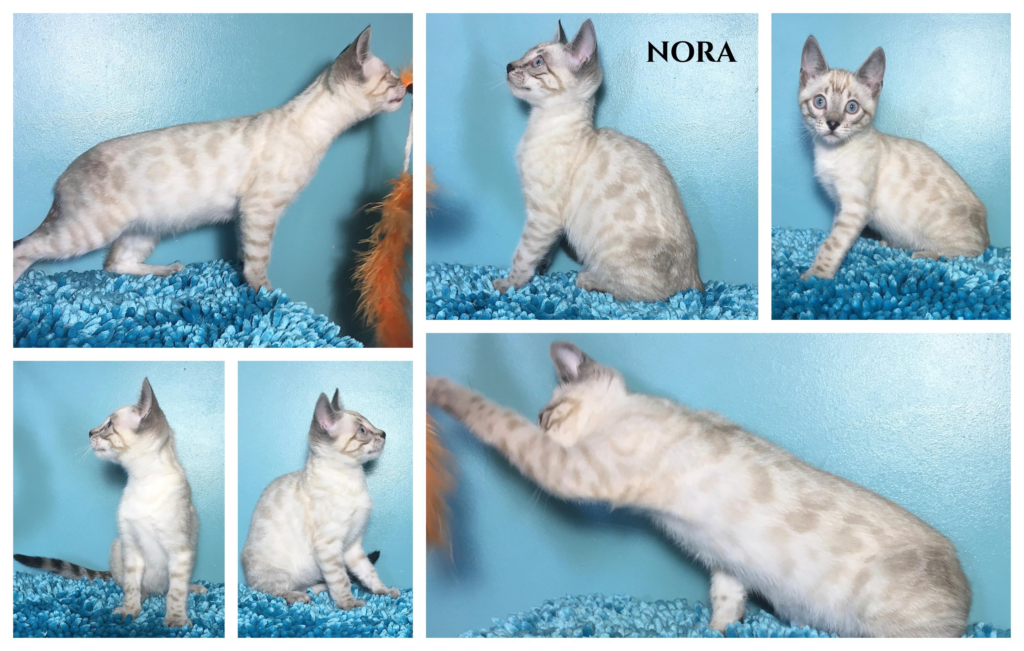 Nora 13 weeks