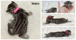 Nadara 3 weeks