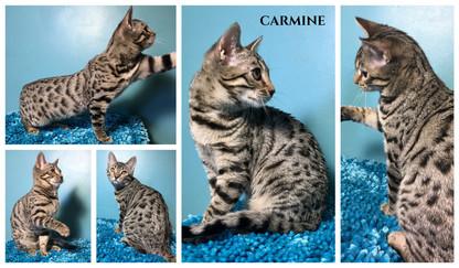 Carmine 18 weeks.jpg