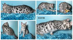 Navir 16 weeks