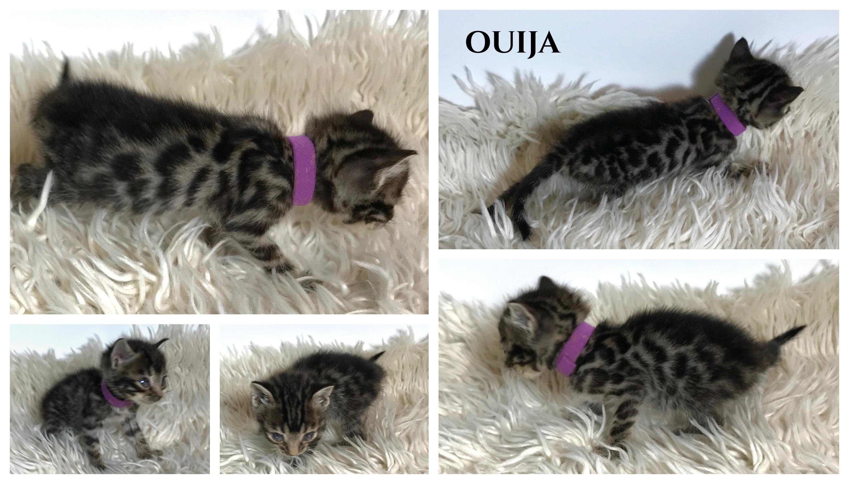 Ouija 5 weeks