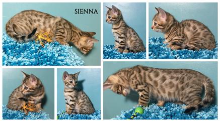 Sienna 9 weeks.jpg