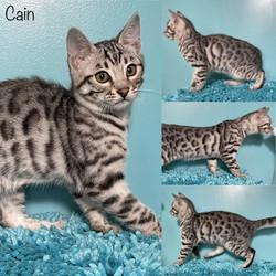 Cain 12 weeks