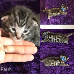 Kazak 2 weeks