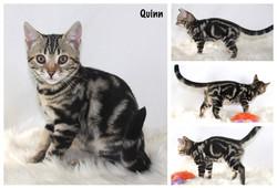 Quinn 12 weeks
