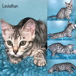 Leviathan 14 weeks