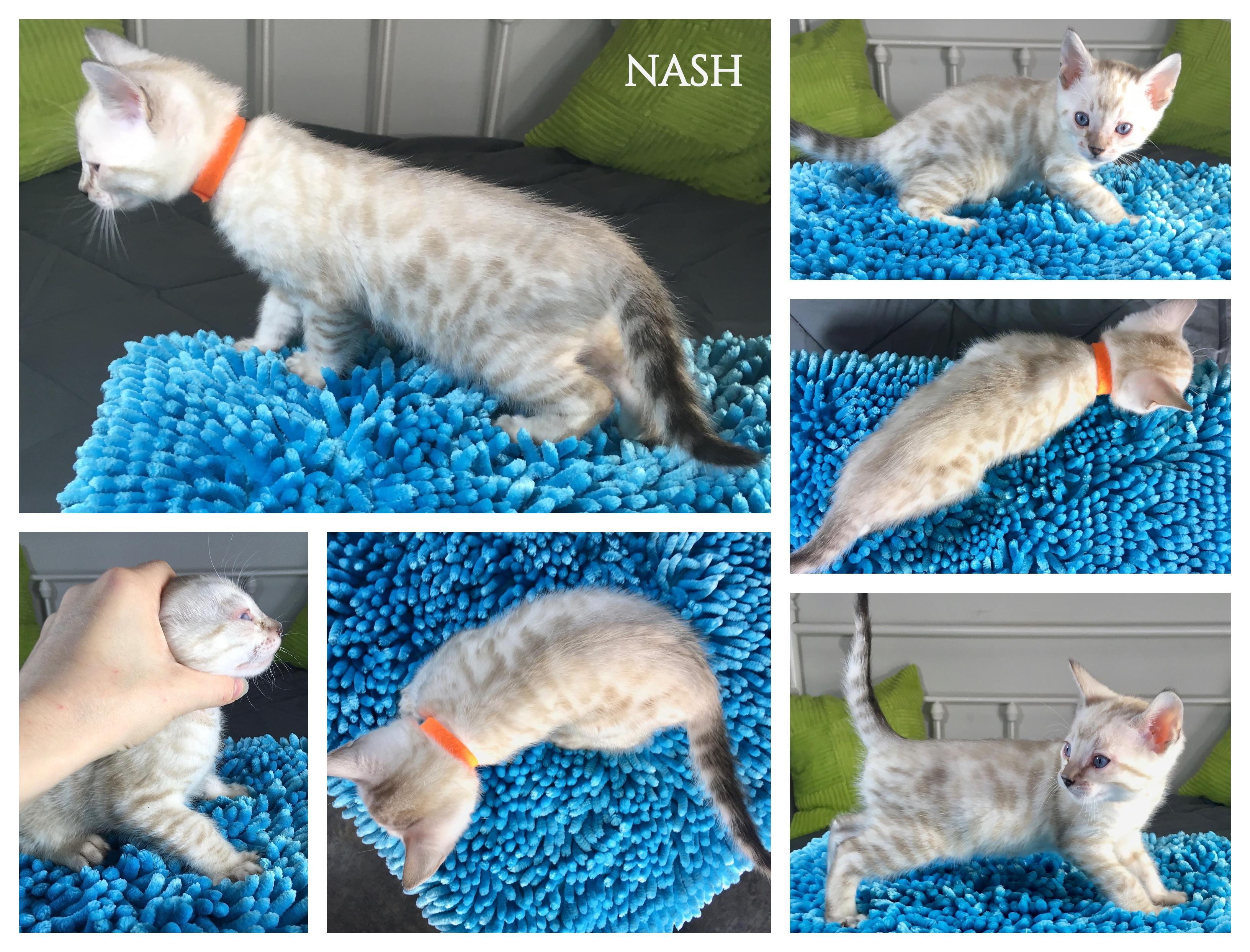 Nash 6 weeks