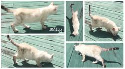 Sally 11 weeks