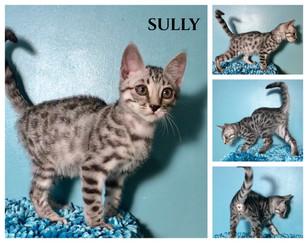 Sully 12 weeks.jpg