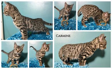 Carmine 9 weeks.jpg
