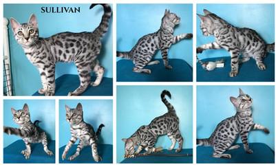 Sullivan 19 weeks.jpg