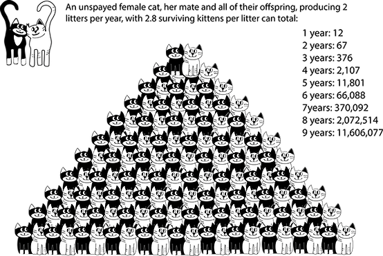 unspaycatgraphic.png