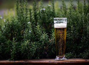 alcohol-beer-beverage-995686.jpg