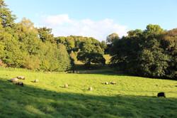 Wonham Oak
