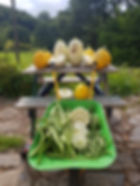 A haul from the Exmoor veg patch - ideal for self-catering cottages