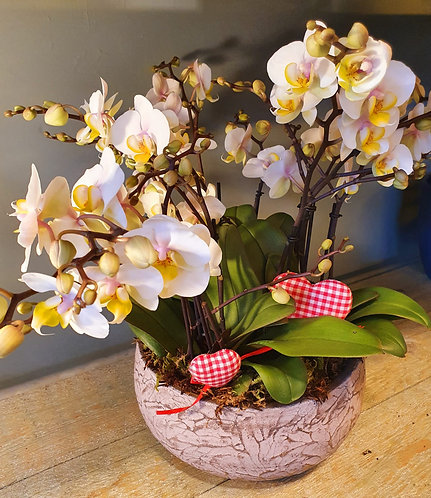 Orchidee in schaal
