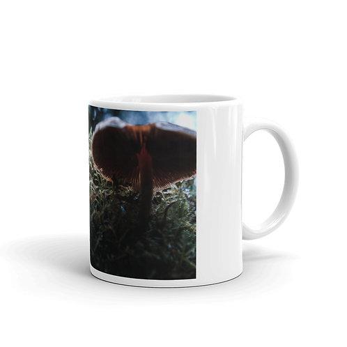 PNW Fungi