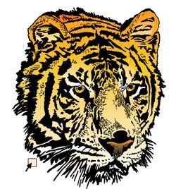 Tiger Coloring